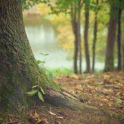 Planter des arbres pour sauver la planète