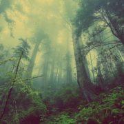 Ecologie : avance-t-on dans le bon sens ?